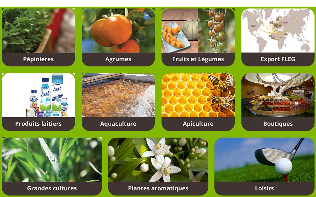 Les Domaines Agricoles filières